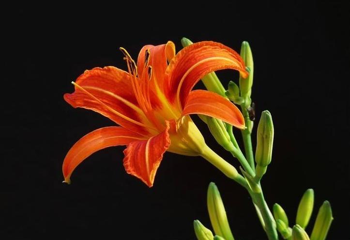 2019母親節送些什麼鮮花?