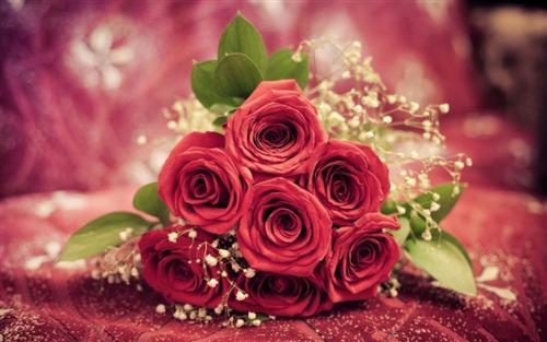 關於玫瑰的一些有趣知識
